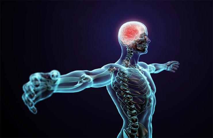 emberi-test-2-6d4b528391 10 érdekes orvosi tény a testedről