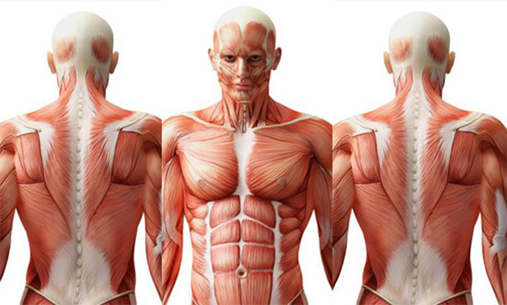 emebri-test-1-1e3442c933 10 érdekes orvosi tény a testedről