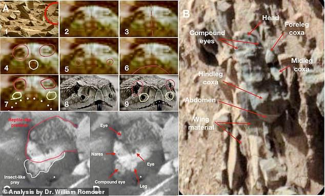 Rovarok nyomaira bukkantak a Marson: szárnyak, és lábak kerülhettek elő?!