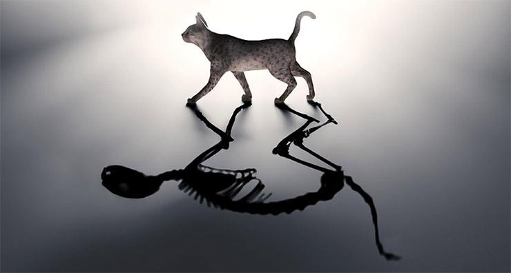 schrodinger-macskaja-1-0849fcadaf Schrödinger macskájának bizarr gondolatkísérlete
