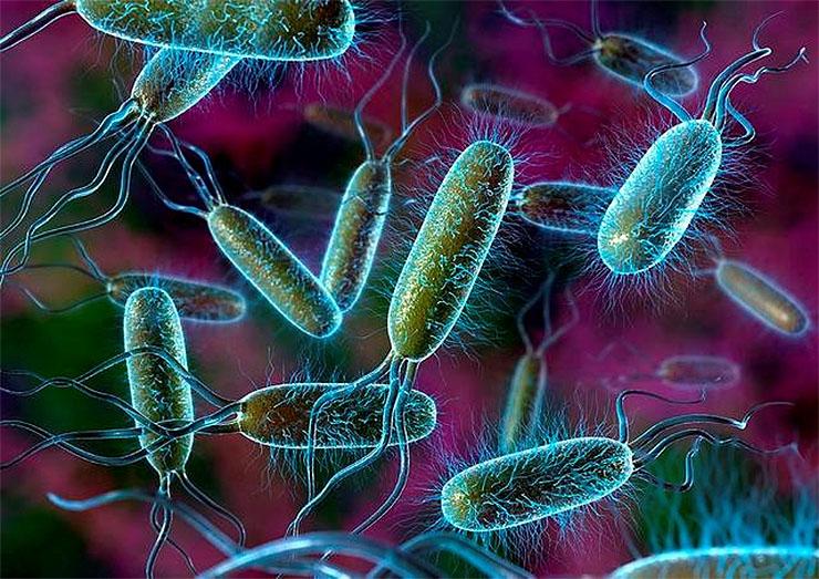 szuperbakteriumok-4-6a301c5ba4 Veszélyes szuperbaktériumokkal van tele a Duna vize