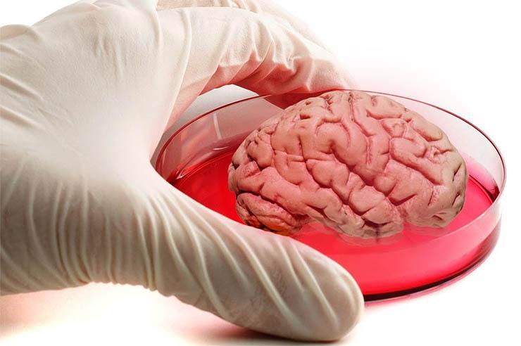 agyat-novesztettek-laborban