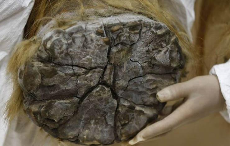 Mamut bébi talpa