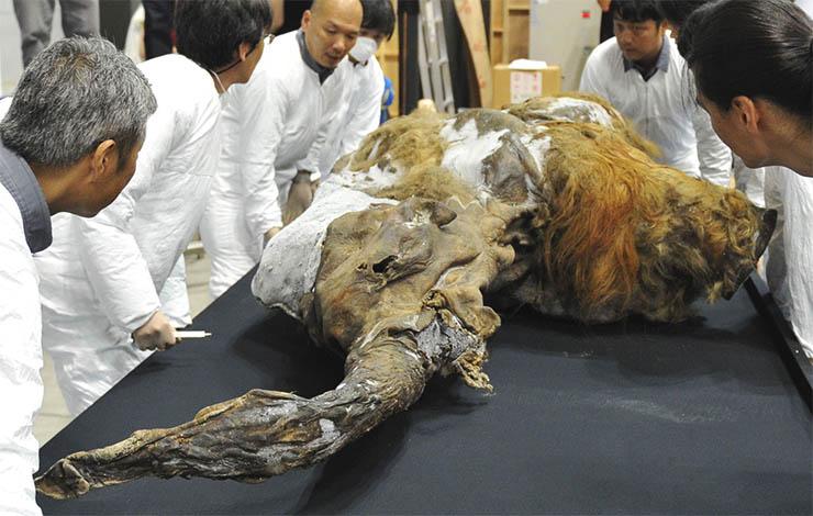 mamut-tetem