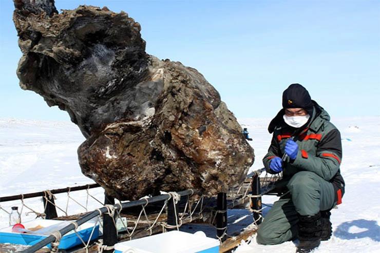 megfagyott-mamut-tetem