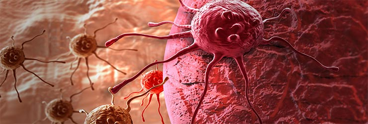rakos-sejtek