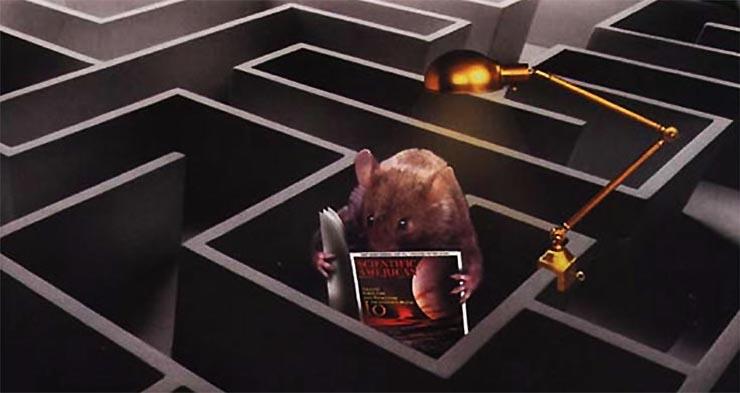 kiserleti-eger-labirintus