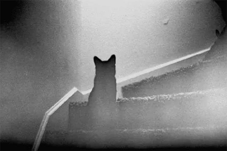 macska-szellemek