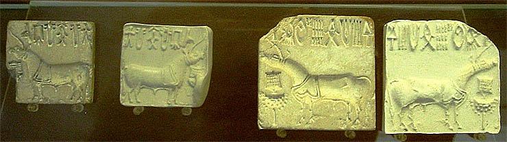 indus-volgyi-faragasok-unikornis