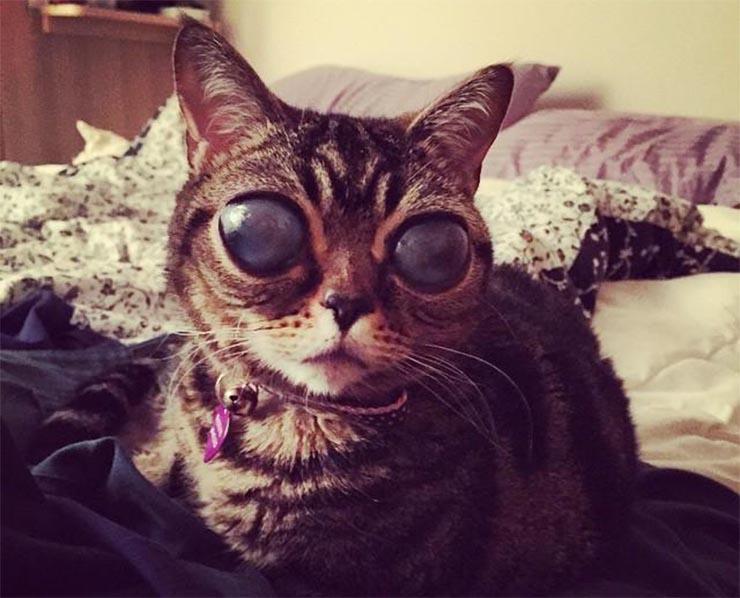 matilda-ufo-macska