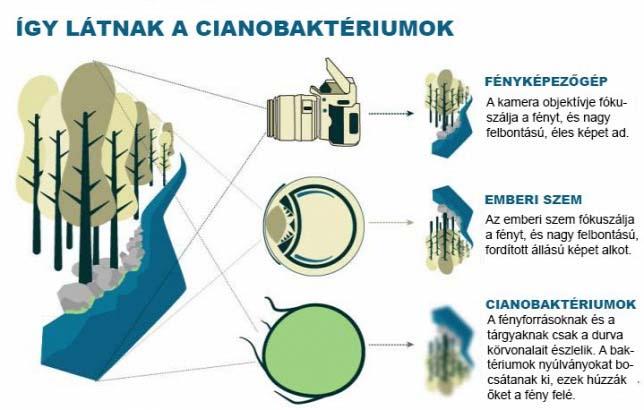igy-latnak-a-cianobakteriumok
