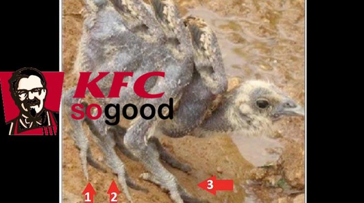 kfc-6-szarnyu-csirke
