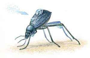 namibiai-sivatagi-bogar