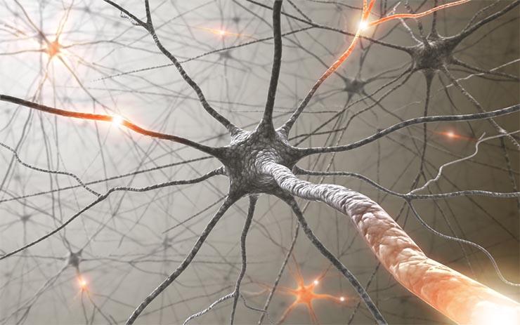 neuron-palyak