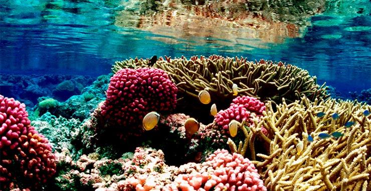 korall-elovilag