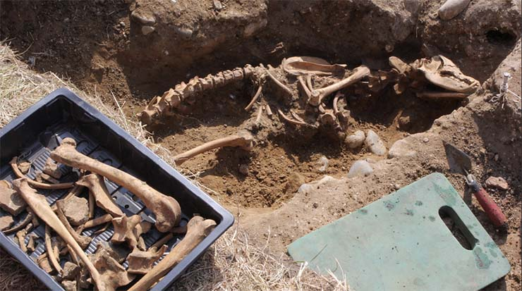 bestia-csontjai
