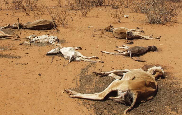 Az egész világon egyre több állat hullik el az extrém meleg időjárás miatt.
