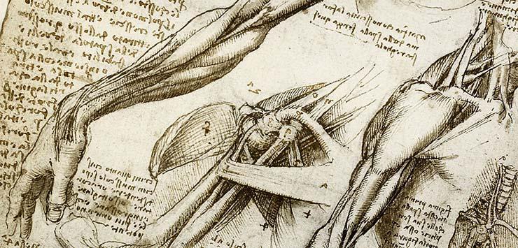 emberi-anatomia