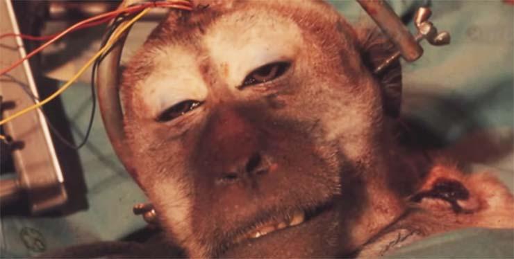 fejatultetes-majom-2