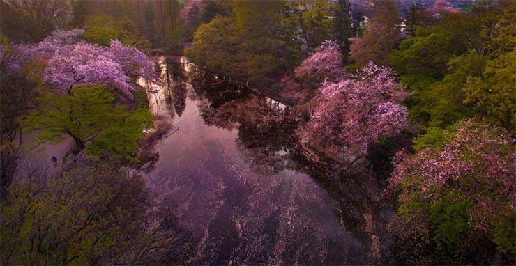 inokashira-park-3