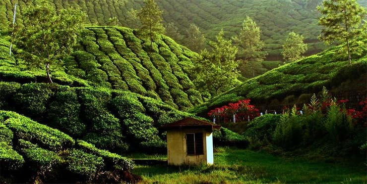 kolukkumalai-tea-ultetveny-india-2