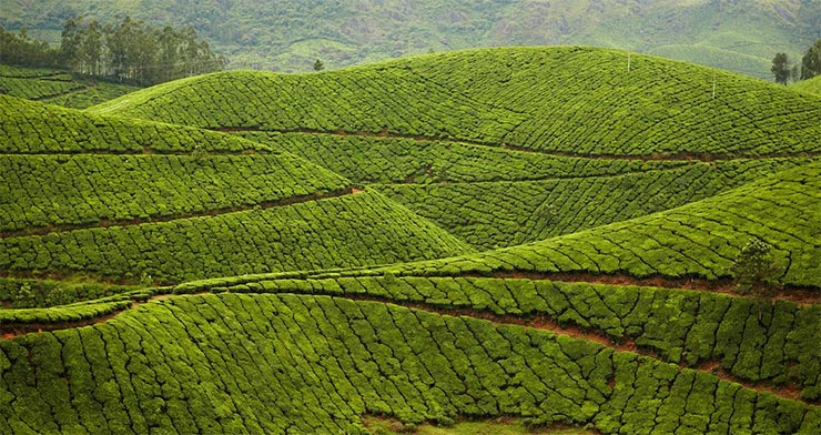 kolukkumalai-tea-ultetveny-india