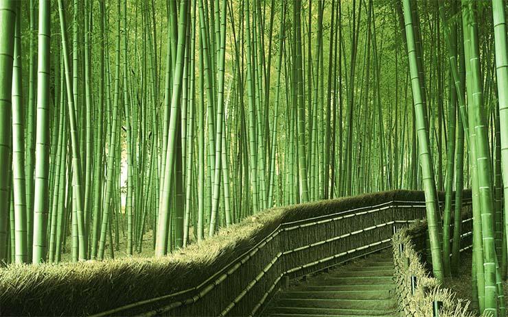saganoi-bambuszliget-2