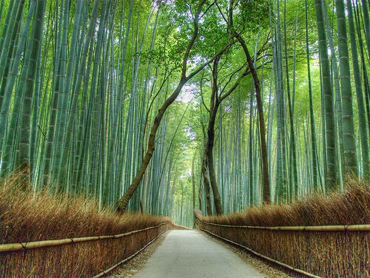 saganoi-bambuszliget
