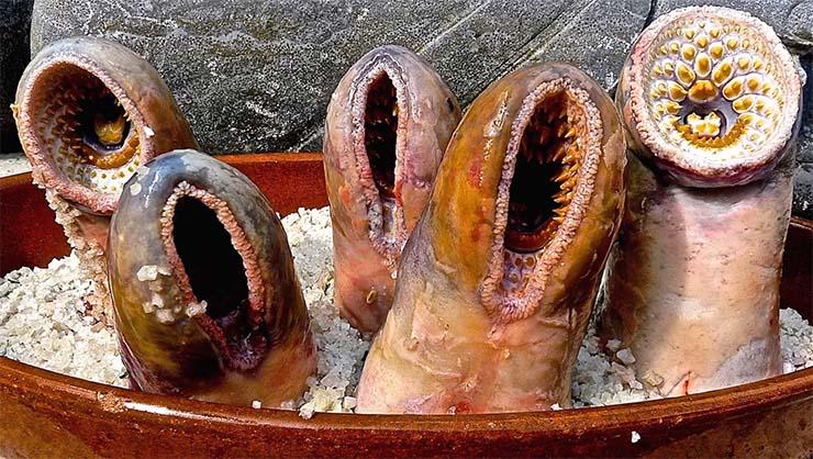 tengeri-ingolak