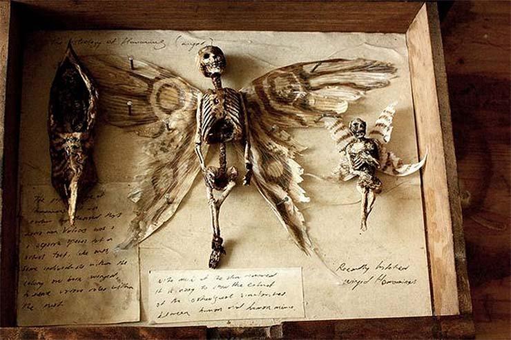 tunder-csontvaz
