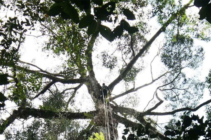 a-vilag-legmagasabb-tropusi-faja-2