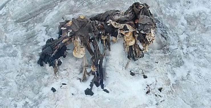 alpokbol-kiolvado-halottak
