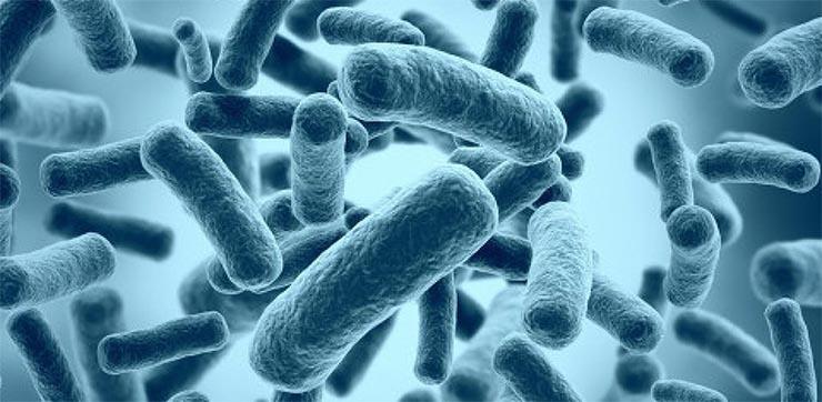 baktérium-2