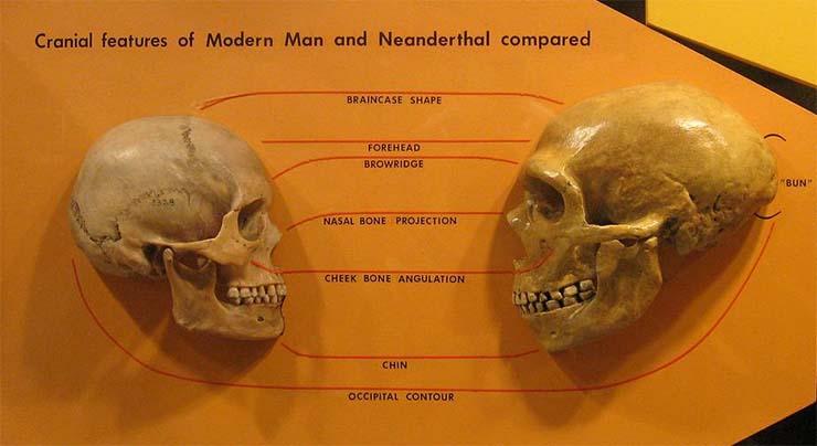 neandervolgyi-modern-ember-koponya