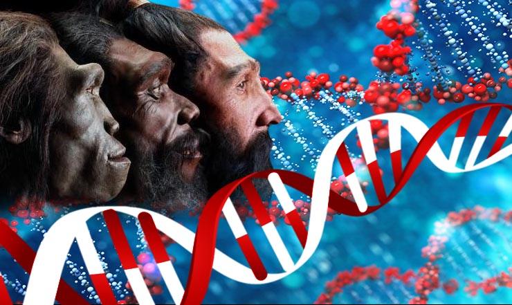 emberi-evolucio