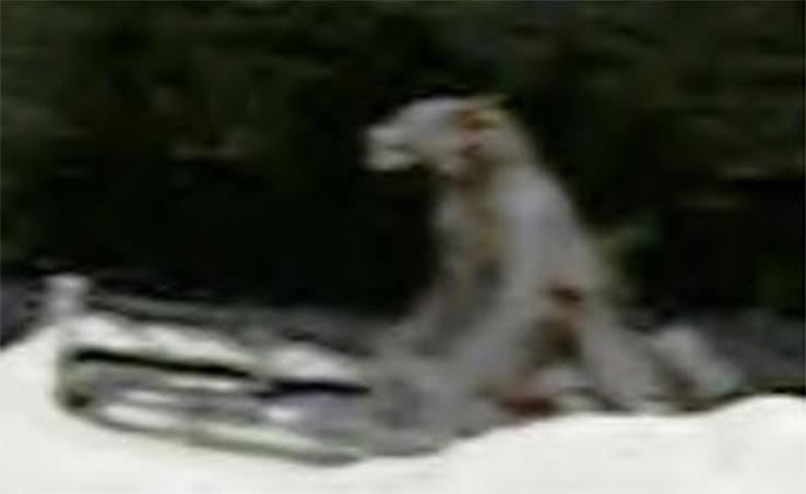 farkasember-az-ut-mellett