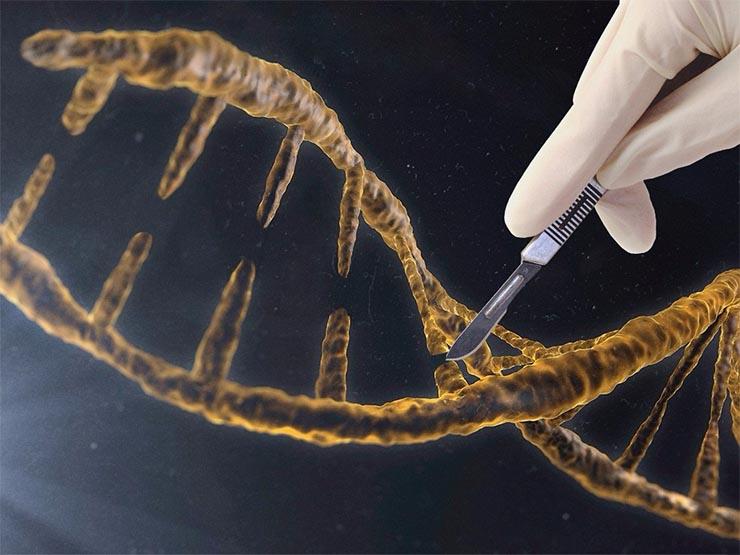 genetikai-modositas