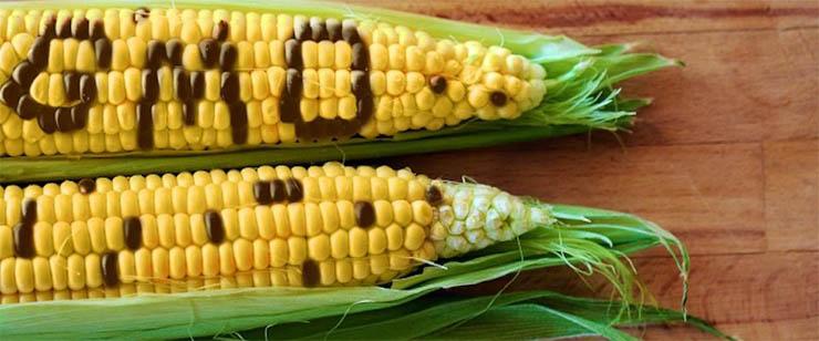 gmo-kukorica