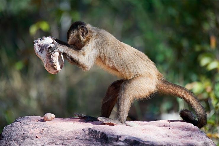 majmok-es-az-eszkozhasznalat