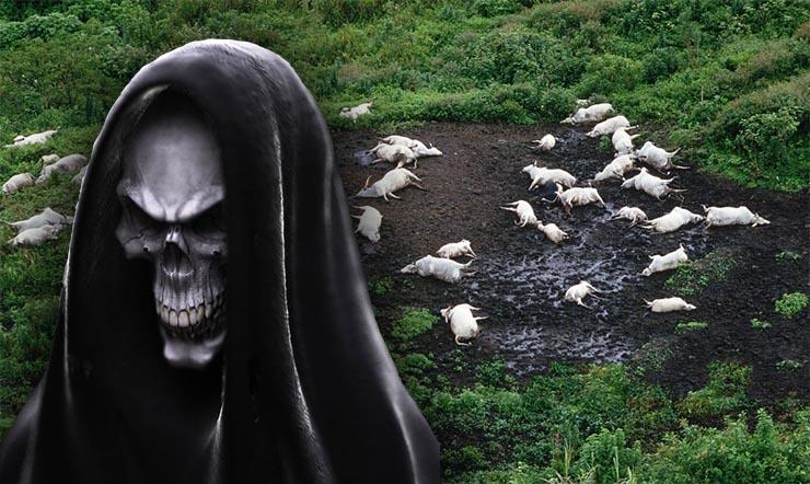 halott-allatok-halal