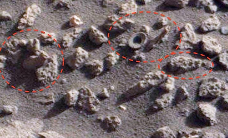 marsi-korall