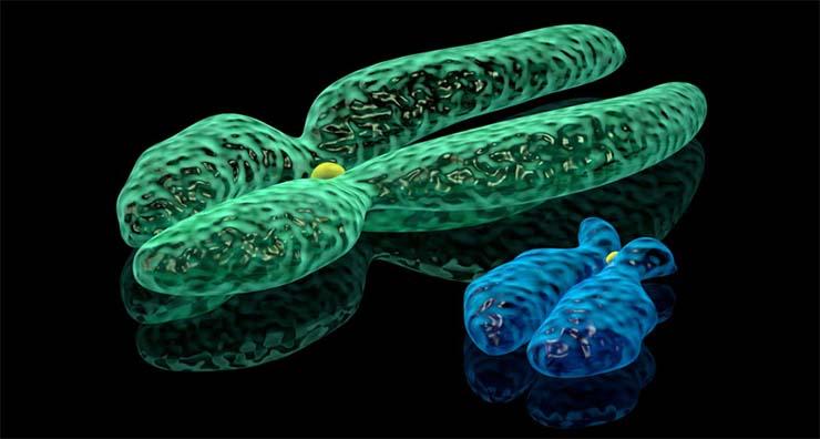 y-kromoszoma